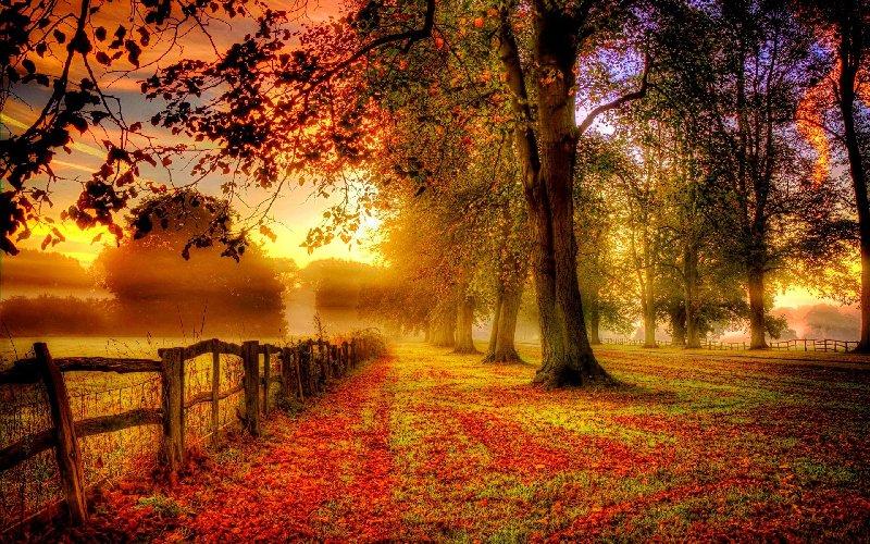 L'autunno e le sue festività di Luisa Paglieri