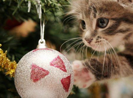 Il Natale e gli animali